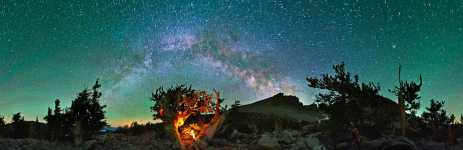Nevada - Great Basin NP - Milky Way Over an Ancient Bristlecone Pine Forest - Nevada - 360