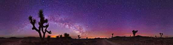 California - Joshua Trees and the Milky Way Down in Saline Valley - Death Valley - 360