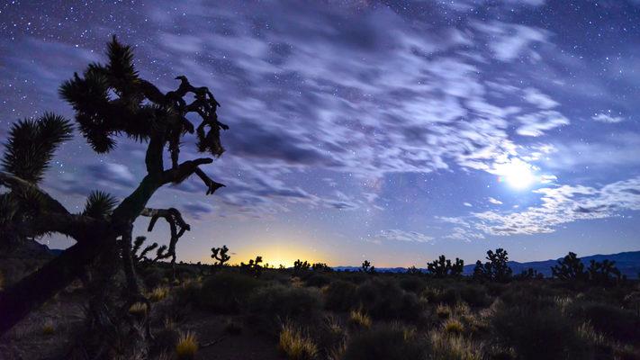 Nevada - Joshua Tree, Setting Moon -  Lights of Vegas Timelapse